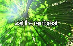 visit the rainforest.