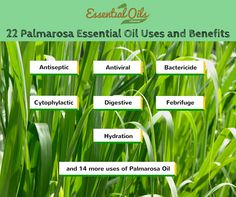 22 Palmarosa Essential Oil Uses and Benefits That Will Give You Great Comfort - Essential Oils Informer Palmarosa Essential Oil, Essential Oil Uses, Aromatherapy, Infographic, Essentials, Herbs, Blonde Brunette, Young Living, Haircolor