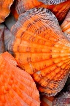 orange and rust beach shells Shades Of Orange, Orange Aesthetic, Orange, Sea Life, Colours, Sea Shells, Ocean Treasures, Sea Creatures, Sea