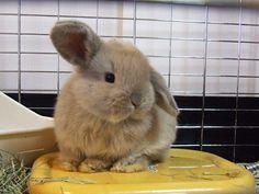 Bunny うさぎ みみピ~ン