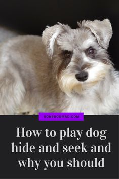 A real classic and such good fun to play with your beloved pooch. #canineenrichment #dogtips #dogplayideas
