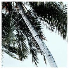 SUMMER Hair gehts lighter  Skin gets darker Water gets warmer Drinks get colder Music gets louder  Nights get longer Life gets better  Was wird noch alles besser im Sommer? Haben wir etwas vergessen?  #summer #palmtrees #better #everythingetsbetter