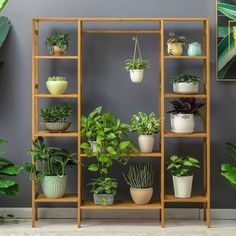 Plants The most classic green plant ornament - Kornelia Nowak, # green plant ornament # classic Indoor Plant Shelves, Garden Shelves, Garden Plant Stand, Diy Plant Stand, Indoor Plant Stands, House Plants Decor, Plant Decor, Cool Plants, Green Plants