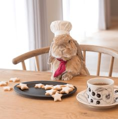 Pui Pui The Bunny Has a Very Busy Day Today - World's largest collection of cat memes and other animals Cute Baby Bunnies, Funny Bunnies, Cute Babies, Cute Little Animals, Cute Funny Animals, Cute Dogs, Cute Bunny Pictures, Baby Pictures, Fluffy Bunny