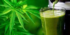 Es gibt weitere Beweise dafür, dass Cannabisöl Krebszellen zerstört, schwere Epilepsie heilt, durch Multiple Sklerose verursachte Muskelkrämpfe behandelt und Leben rettet. Das US-amerikanische Krebsforschungszentrum hat zugegeben, dass Cannabisöl tatsächlich Krebszellen tötet. Es ist weithin anerkannt, dass natürliche Verbindungen in Cannabis – eine Pflanze, deren Verwendung, Verkauf und Besitz in den meisten Ländern nach wie vor
