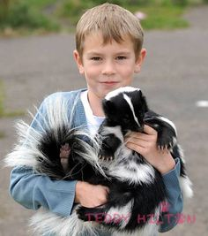 Exotic pets 530791506064873003 - Yes- I will have an actual Pet Skunk at some point on this adventure. Animals And Pets, Baby Animals, Cute Animals, Small Animals, Unusual Animals, Animals Beautiful, Skunk Pet, Skunk Hair, Skunk Drawing