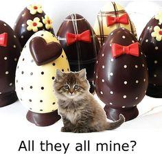 greedy kitten