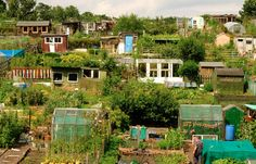 The Origin Of The Allotment For those with small gardens, or no garden at all, an allotment or community garden offers the opportunity to grow and harvest vegetables and flowers for domestic use. At one time allotments were occupied by serious, experienced, competitive gardeners but now people of all ages,...
