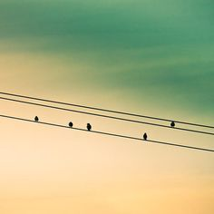 Birds on a Wire  (I love the simplicity of this )