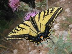 insect - Yahoo Hasil Image Search