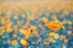 花兒   Flickr - Photo Sharing!