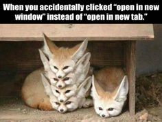 "Fifteen Fox Memes In Honor Of Those Cute Little Forest Puppers - Funny memes that ""GET IT"" and want you to too. Get the latest funniest memes and keep up what is going on in the meme-o-sphere. Funny Cute, The Funny, Hilarious, Animal Memes, Funny Animals, Cute Animals, Animal Pictures, Funny Pictures, Random Pictures"