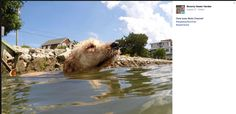Dixie loves Motts Channel! #dogdaysofsummer #westmarine