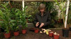 Moderní hobby magazín Filipa Čapky. Užitečné informace ozahradách, bydlení astavebních úpravách všeho druhu. Nejnovější trendy pro vaši inspiraci Trendy, Plants, Planters, Plant, Planting, Planets