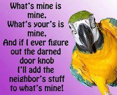 Yip, parrots