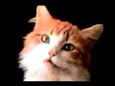 ▶ Meow Song Club Remix - YouTube