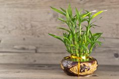 8 Houseplants that Clean and Promote Air Quality