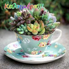 25 Perfect Diy Teacup Mini Garden Ideas To Add Bliss To Your Home. If you are looking for Diy Teacup Mini Garden Ideas To Add Bliss To Your Home, You come to the right place. Here are the Diy Teacup . Vertical Succulent Gardens, Succulent Gardening, Planting Succulents, Container Gardening, Succulent Planters, Tea Cup Planter, Propagate Succulents From Leaves, Teacup Crafts, China Crafts