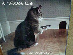 Texas cat... yep, you don't mess with Texas cats either!!! ~~~