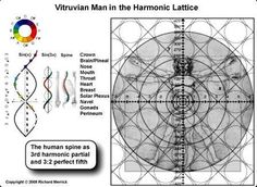 The Vitruvian Man - Leonardo DaVinci