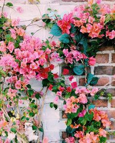 Floral eye candy. Via @shopplanetblue on Instagram