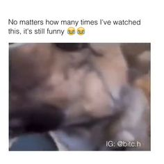 cbd for the dogs! Funny Animal Jokes, Crazy Funny Memes, Really Funny Memes, Funny Dog Videos, Funny Video Memes, Stupid Funny Memes, Funny Animal Pictures, Animal Memes, Hilarious