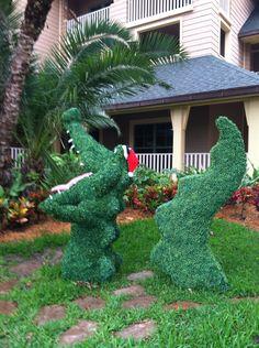 Alligator at Vero Beach Disney Vacation Club