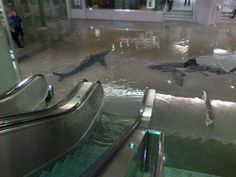 #Toronto Union Station flood spoofs   (it was really this flooded today, but, ahem, no sharks) ;)