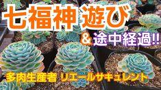 【多肉植物】七福神を可愛くしよ~🎶&枯れ葉とり🎵 - YouTube Succulent Care, Succulents, Youtube, Plants, Succulent Plants, Plant, Youtubers, Youtube Movies, Planets