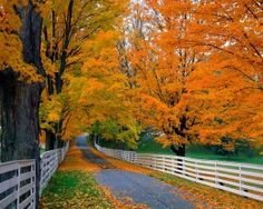 Drive thru New Hampshire/ NE to see the beautiful Fall colors. Beautiful World, Beautiful Places, Beautiful Pictures, Beautiful Roads, Nice Photos, Cover Photos, Autumn Scenes, Fall Wallpaper, Leaves Wallpaper