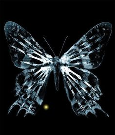 "For those who don't know, this butterfly is from the TV Show ""Fringe"" and it is one of the best shows i have ever seen until now"