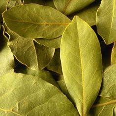 10 Best Herbs for Indoors