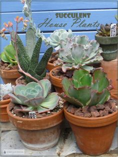 Add some House Plant Succulents to your indoor garden or growing room; bright light is essential, warm temperatures optional. House Plants Decor, Plant Decor, Houseplants Safe For Cats, Different Types Of Succulents, All About Plants, Landscaping Retaining Walls, Small Space Gardening, Gardening Tips, Planting Succulents