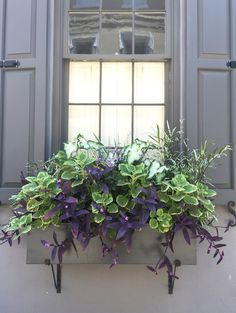 Roadtrip Reality: Charleston Window Boxes Purple