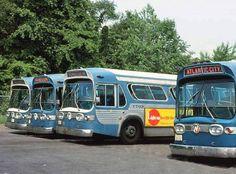 NJ Transit Fishbowl Buses