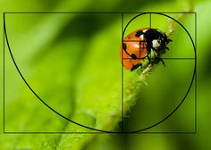 Closeup photograph of a ladybug on a leaf. Fibonacci Spiral, Rule Of Thirds, Digital Photography, Ladybug, Close Up, School, Kunst, Golden Ratio, Ladybugs