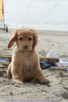 10. #Beach Puppy - 49 Adorably Cute Dogs to Make Your Day 100 #Times… #Puppy