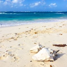 Anguilla is a special place. Just off the coast of St. Martin and St. Barts hides this beautiful island home to simply 15,000 people. This island will steal your heart away, it's the perfect getaway with a littlebit of everything for everyone. It's not the cheapest Caribbean island to visit, most tourist who visit this [...]