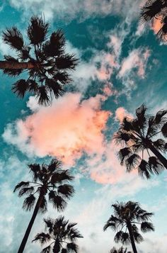 Palm Trees Phone Wallpaper