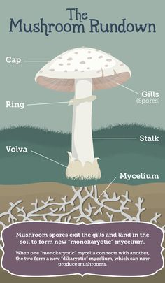 Growing Mushrooms at Home: Anatomy of a Mushroom