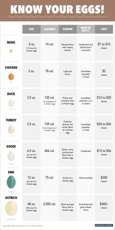 Great Fresh Chicken Eggs and Protein – Chicken In The Shadows Raising Quail, Raising Ducks, Raising Chickens, Best Egg Laying Chickens, Raising Goats, Backyard Chicken Coops, Backyard Farming, Chickens Backyard, Fancy Chickens