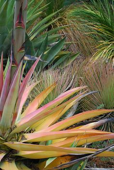 Drought tolerant ornamental grass great outdoors for Spiky ornamental grasses