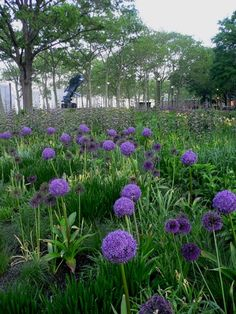 Oudolf ~ Battery Conservancy, Manhattan Island, New York, NY, USA