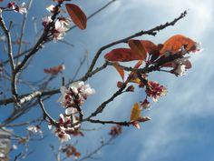 Pre-Spring blossoms!