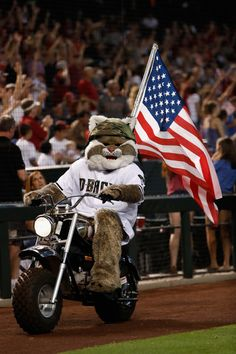 D Baxter the Bobcat, Memorial Day at Chase Field//May 30, 2016