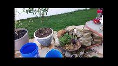 Urban Garden March 2