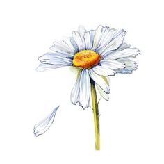 Art Print: Daisy by okalinichenko : 12x12in