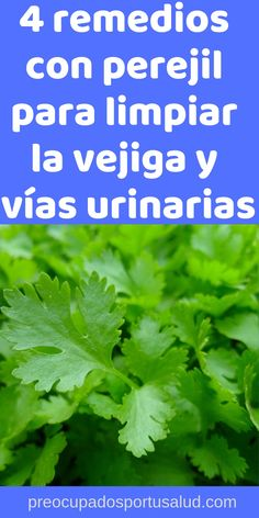Dear God, Diabetes, Healthy Tips, Home Remedies, Aloe, Medicine, Herbs, Nature, Medicinal Plants