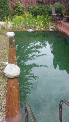 Koupací jezírko | Stavba jezírek Swiming Pool, Swimming, Backyard, Patio, Land Scape, Pond, Natural Pools, Attraction, Outdoor Decor