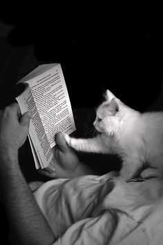 Cats and Books...two of my favourite things!